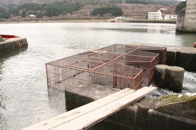 荒川の鮭を捕獲するカゴ.jpg
