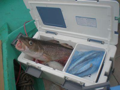 船上の鱈.jpg