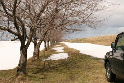 荒川の桜並木.jpg