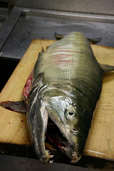 12月21日のAさの鮭.jpg