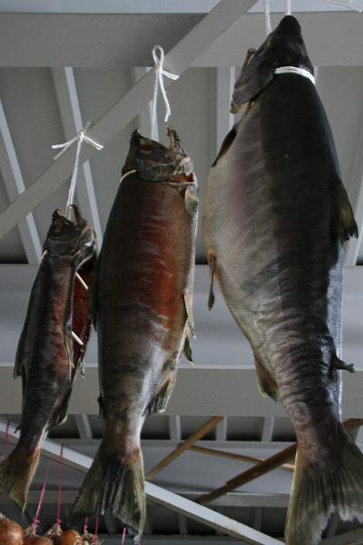 塩引鮭.jpg
