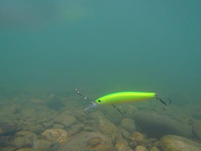 水中のミノー.jpg