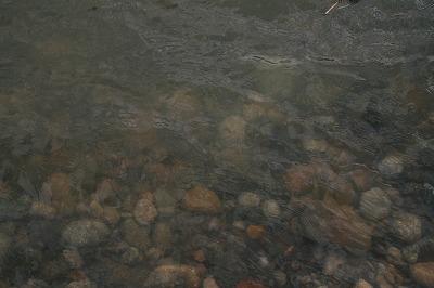 本日の水質.jpg