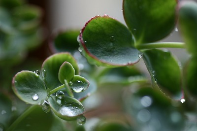 雨の雫.jpg