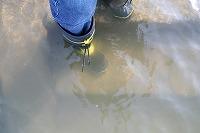 濁度計11の水質.jpg