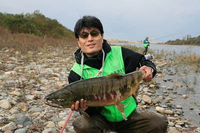 荒川のサケ(鮭)3.jpg
