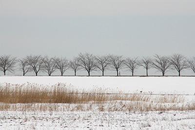 荒川右岸の桜並木.jpg