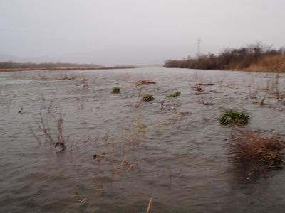 増水の荒川.jpg