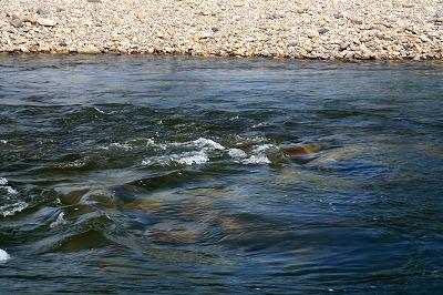 川底の石.jpg