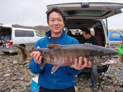荒川のオス鮭.jpg