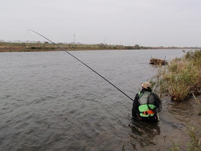 荒川のサケ(鮭)釣り.jpg