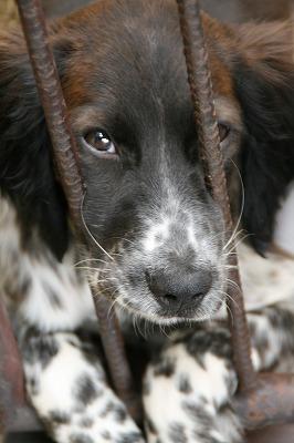 猟犬メリー号.jpg